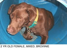 One day left Brownie is a nice natured dog who seems to have gotten loose when his clip wore enough to pull loose. We hope his owner will come for him. He would be a nice dog for someone.  He needs a friend, Please don't leave him here. . .He needs to be someone's special dog.      Please help us SAVE him.