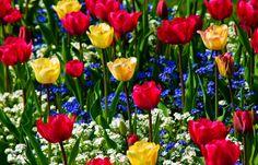 cores azul vermelho amarelo flores - Pesquisa Google