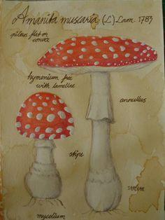 Amanita muscaria - mushroom postcard - MORE ART, LESS CRAFT