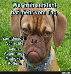 The early bird catches the worm? Tierischer Humor, Man Humor, Facebook Humor, Funny Dogs, Funny Memes, Jokes, Image Facebook, Animals And Pets, Funny Animals