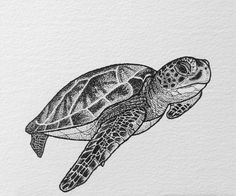 Tattoo Sketches, Tattoo Drawings, Art Sketches, Pencil Drawings Of Animals, Animal Sketches, Dog Tattoos, Animal Tattoos, Tattoo Tortuga, Turtle Sketch