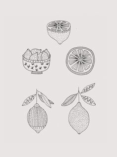 Ryn Frank is a freelance illustrator, specialising in hand drawn illustrations. Pretty Drawings, Cool Drawings, Botanical Illustration, Illustration Art, Handpoked Tattoo, Ink Illustrations, Art Inspo, Art Sketches, Line Art