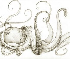 Octopus by ~octootco➕More Pins Like This At FOSTERGINGER @ Pinterest✖️