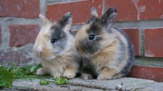 Baby bunnies I need to find a Bunny like this. Animals And Pets, Baby Animals, Funny Animals, Cute Animals, Cute Baby Bunnies, Cute Babies, Cutest Bunnies, Cute Animal Photos, Animal Pictures
