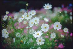 by rosemary*, via Flickr