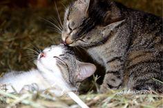 Cascina con i gatti , Italy foto di Violeta Dyli