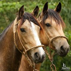 Love these beautiful horse buddies.