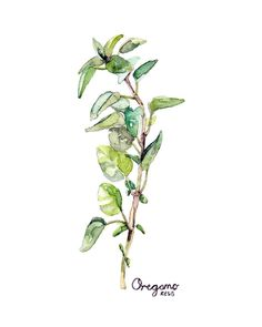 Oregano Herb Painting Print from Original от TheColorfulCatStudio