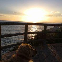 #Paseo con #Juana #Pipa 02/18 * #Peludos #Mascotas #Perros #Mascottes #Mascot #Pets #Momentos #Dog #Ilovedog #Atardeceres #fotografia #Photo #photography   #RincóndelaVictoria #ElCantal