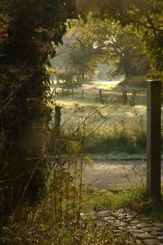 Through the garden gate... |  On a misty autumn morning, looking through my kitchen window...
