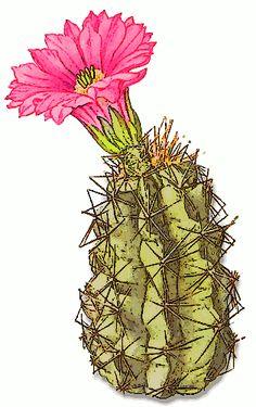 Free Cactus Clipart - Public Domain Plant clip art, images and ...