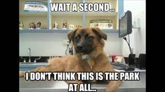 Dog Quotes Funny, Funny Animal Memes, Funny Animal Videos, Funny Dogs, Funny Animals, Cute Animals, Funny Memes, Animal Humor, Animal Quotes