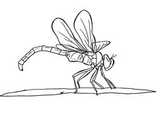 Free Dragonfly Coloring Page 19
