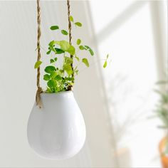 Buy Mkono 2 Pack Ceramic Hanging Planter Flower Pot Water Planter Plant Vase Decorative Hydroponic Container for Home Indoor Decor >>>>Check Link Hanging Flower Pots, Hanging Vases, Flower Planters, Flower Vases, Orchid Flowers, White Planters, Ceramic Flower Pots, Ceramic Planters, Planter Pots