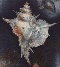 JÖRG SCHMEISSER, 523 shell, back (1999) Fossils, Art School, Printmaking, Shells, Rocks, Paintings, Gemstones, Drawings, Artist