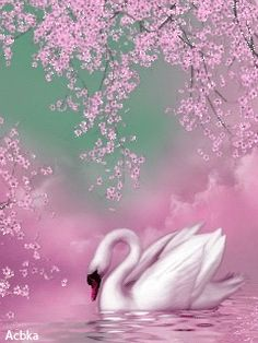 Swan in pink Beautiful Swan, Beautiful Birds, Swan Painting, Glitter Graphics, Animation Background, Swan Lake, Swans, Bird Art, Pretty Pictures