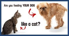 Raw Feeders: Why Are You Feeding Your Dogs Like Cats? - Dogs Naturally Magazine