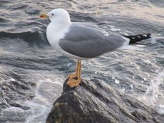 a seagull looking at the sea!