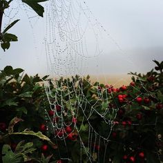 """""""Spiders catching the morning dew are like balls of crystals #morning #webb #spiderweb #nature #outdoor #walk #love #water #healthy #life"""" by @pearlhousefarm. #familia #amor #love #family #caras #luxurylifestyle #luxury #luxurylife #fashion #lifestyle #design #style #designer #millionaire #travel #luxurycars #fashionblogger #luxurytravel #summer #luxuryliving #money #instagood #luxuryhomes #art #success #entrepreneur #rich #model #instadaily #millionairelifestyle #instagram #instacool…"""