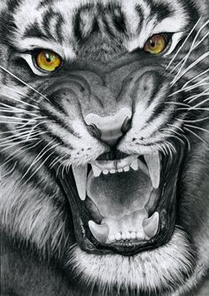 This is a drawing of my first tiger which is, what I think, one of the most beautiful animals in the world. Like the cat-drawings I made earlier, I& coloring the eyes in this drawing but keep the . Tatoo Tiger, Tiger Tattoo Design, Lion Tattoo, Tiger Drawing, Tiger Art, Tiger Sketch, Tiger Head, Most Beautiful Animals, Beautiful Cats