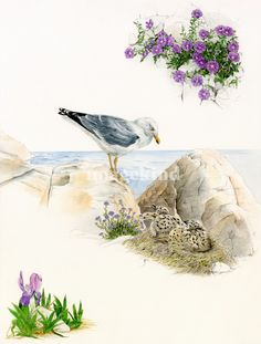 Seagull - endemisms and nesting birds.  by Patrizia Donaera , from $12.34