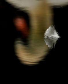 fallen feather.  by Fran Byrne.