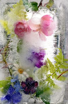 Flowers in ice/ Цветы во льду Olga Weston photography