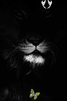 EeE Kurt EeE Kurt<br> Nature Photography, Africa, Black And White, Animals, Beautiful, Photos, Blanco Y Negro, Animaux, Pictures