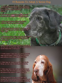 10 Reasons to Adopt A Senior Dog | Dog Lovers Today