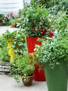 Stagger Height..  Select containers of different sizes and create a grouping to offer additional interest. These four containers filled with cucumber, tomato, pepper, basil, thyme, and parsley add lots of visual appeal to a landscape.