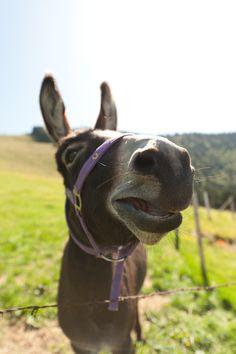 donkey ready for carrot