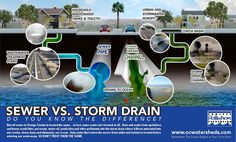 Sewer Vs. Storm Drain - Storm drains collect rain water to help prevent flooding in our communities and recieve no treatment or filtering before flowing into our rivers, bays and the ocean.