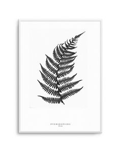 Scandinavian fern wall art print. Looks beautiful alongside our Monstera poster design. Available online with free shipping worldwide.