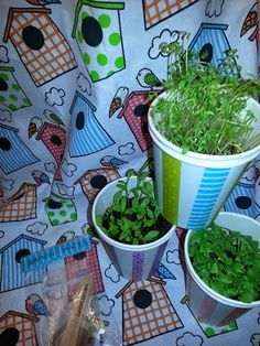 Kräuterbeet to go in alten Pappbechern / Herbs to go in old paper cups / Upcycling
