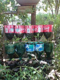Water efficient bottle herb garden
