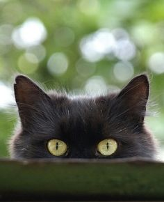 * (A cats eyes are windows enabling us to see into another world.) ~ Irish Legend