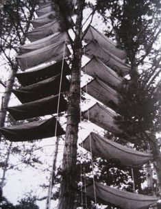Tree Hammock Tents. Yikes