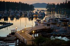 Friday Harbor, Washington // Northwest Adventure and Weekend Travel for the 2015 Itinerary. Pacific Coast, Pacific Northwest, Oregon Washington, Friday Harbor Washington, Olympia Washington, Places To Travel, Places To Visit, Sleepless In Seattle, Orcas Island
