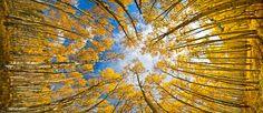 Fall in Colorado - http://tmophoto.smugmug.com/