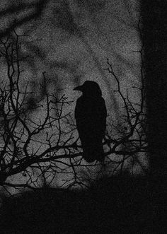 Gothic Aesthetic, Nature Aesthetic, Dark Landscape, Look Dark, Arte Obscura, Dark Art Drawings, Jackdaw, Halloween Wallpaper Iphone, Backgrounds