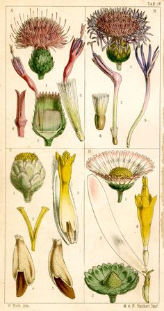 old botanicals