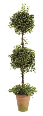 button leaf double ball topiary