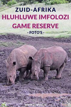 De mooiste gamedrive tijdens mijn rondreis door Zuid-Afrika maakte ik in Hluhluwe-Imfolozi Game Reserve. We kwamen oog in oog te staan met een grote kudde olifanten. Wil je meer foto's zien van Hluhluwe-Imfolozi Game Reserve klik dan hier. Kijk je mee? #hluhluweimfolozigamereserve #wildlife #gamedrive #zuidafrika #jtravel #jtravelblog #fotos