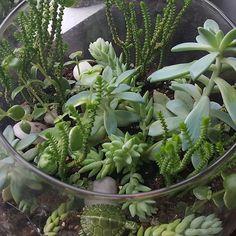 Indoor garden doing well. http://www.thehypertufagardener.com