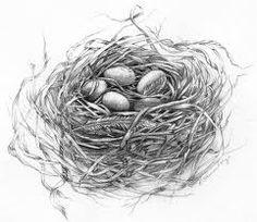 bird nest - Google Search