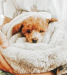 See more of fatmoodz's VSCO. Cute Puppies, Cute Dogs, Dogs And Puppies, Doggies, I Love Dogs, Puppy Love, Baby Animals, Cute Animals, Baby Goats