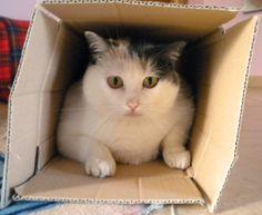 Milu in a box!