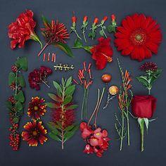The garden collection : colors organized neatly - emily blincoe