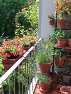 Kornblumen, Zauberglöckchen, Kapuzinerkresse