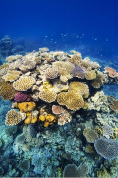 Dive the Great Barrier Reef in Australia